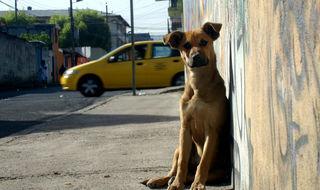 Favela de perros en Brasil