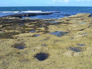 Huge dinosaur tracks in Scotland aren't Nessie's