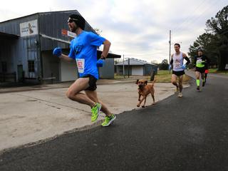 Dog accidentally joins half marathon, places 7th