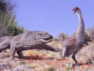 Early humans ate this bird into extinction