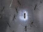 Obama is requesting $1.8B to fight Zika virus