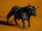 Man killed by bull in Spanish safari park