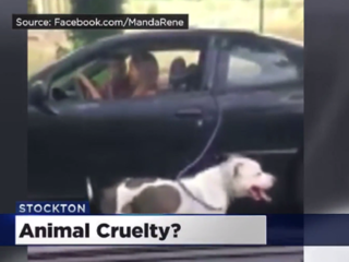 Animal cruelty? Woman drives while 'walking' dog