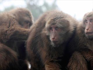 Band of monkeys raid Thai polling place, tear up