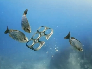 These six-pack rings feed sea animals