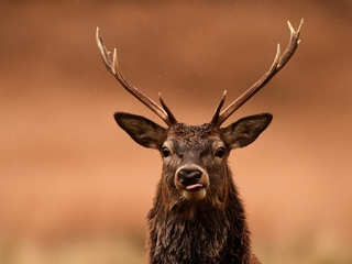 Warrant out for Elbert deputy for poaching deer