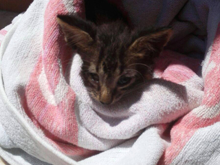 Sailor saves drowned kitten with mouth-to-mouth
