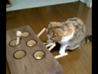 WATCH: Cat plays homemade whack-a-mole