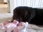 WATCH: Dog preciously watches over newborn
