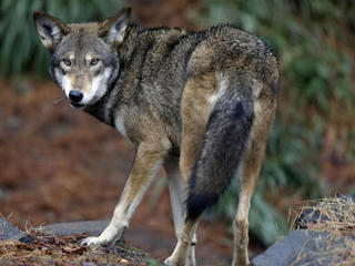 Report: Wildlife struggling since 1970s