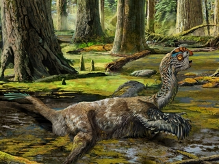 New bird-like dinosaur fossil found in China