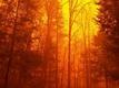 Officials stress mitigation as fire danger rises