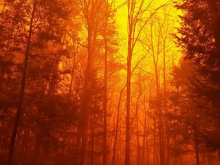 Wildfires in Tennessee force thousands to leave