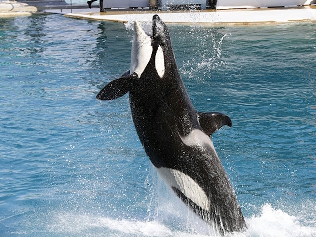 Beloved orca known as Granny dies