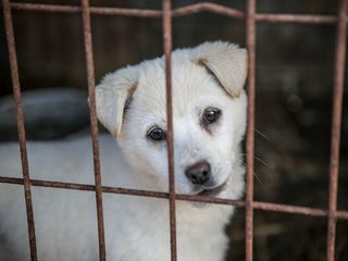 200 dogs rescued from meat farm in South Korea