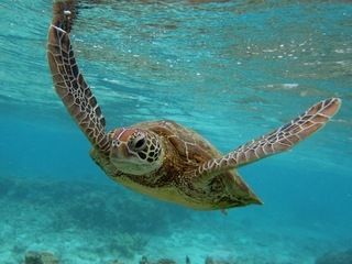 What declining oxygen levels mean for ocean life