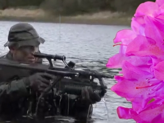 Politician wants Irish army to help with flowers