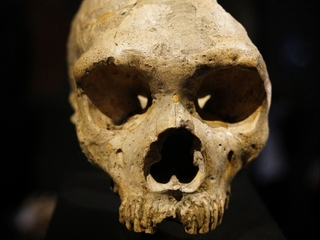 Neanderthals ate more veggies than we thought