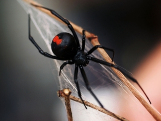 Spiders eat up to 800M metric tons of bugs
