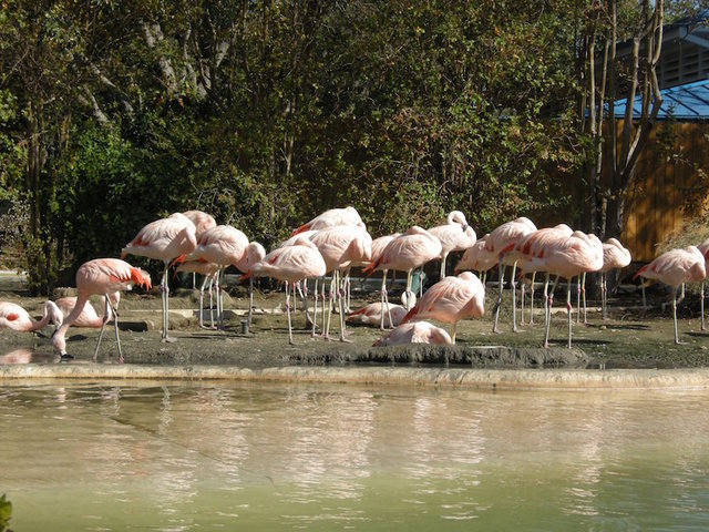 Kids break into a zoo and stone a flamingo to death - 7NEWS Denver TheDenverChannel.com