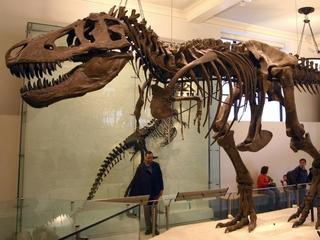 Theory shakes up 130 years of dinosaur doctrine