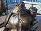 Toxic algae is killing California's sea lions