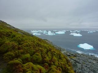 A greener Antarctica isn't always a good thing