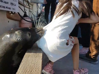 Video: Sea lion grabs girl, pulls her into water