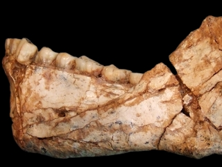 Homo sapiens might be much older than believed