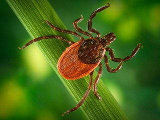 Where these 7 blood-feeding ticks live