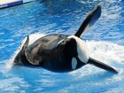 SeaWorld investigated for 'Blackfish' response