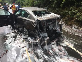 Truck dumps 'slime eels' over Oregon highway