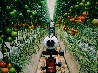 360 VIDEO: The Ultimate Greenhouse