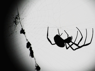 Neighbors call cops on man yelling at spider