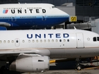 United suspends pets in cargo holds