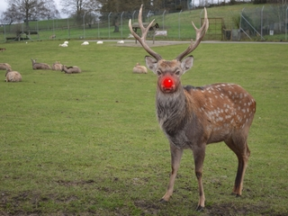 Google's replacing Rudolph with a robot