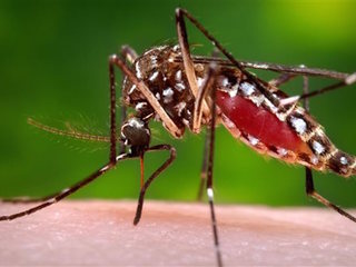 Study: Zika may cause temporary paralysis