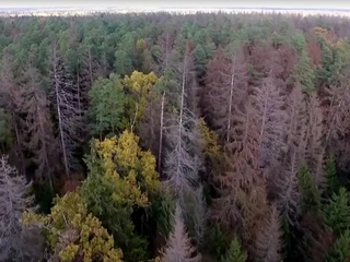 Poland to log part of European primeval forest