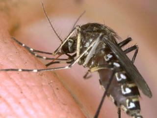 Communities battling West Nile virus risk
