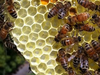 What to do if you spot a swarm of bees