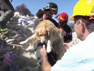 Dog rescued 9 days after Italy earthquakes