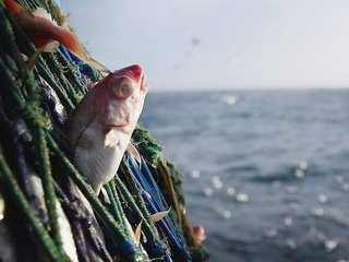 A new Google app can track illegal fishing