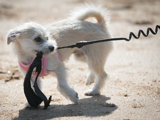 Dog leash debate reignites in Denver