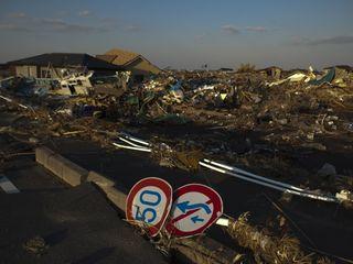 Boars overrun Fukushima