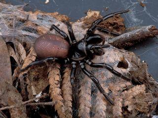 Spider venom may prevent brain damage
