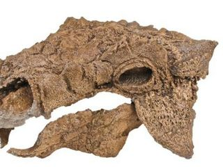 Scientists name dinosaur Zuul