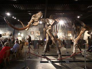 How does animal de-extinction work?