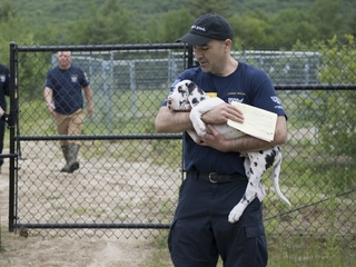 84 Great Danes rescued from puppy mill