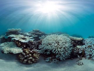3-year coral bleaching event is likely over