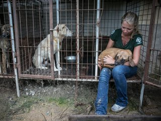 149 dogs recovered from S. Korea dog meat farm